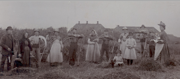 Danish Harvest, 1885. Courtesy of the Museum of Danish America.